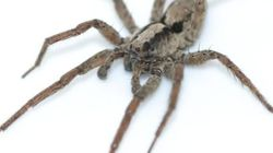 거미가 섹스하기 전에 부르는