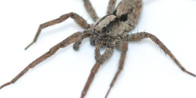 거미도 섹스하기 전에는 노래를
