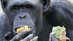 요리가 인류의 진화를