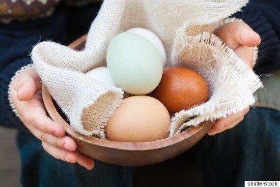 왜 한국에서는 흰색 달걀이 사라지고 갈색 달걀이