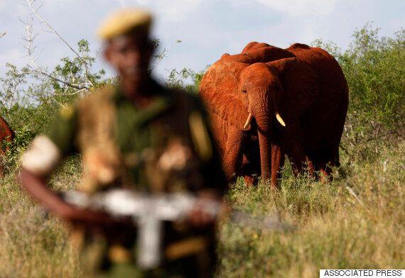 5년 간 탄자니아 코끼리 60%가 밀렵
