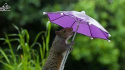 우산을 쓴 다람쥐를 포착한 사진