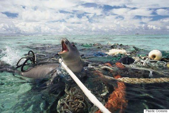[허핑턴 단독] 바다 스스로 쓰레기를 청소하게 만든 스무 살