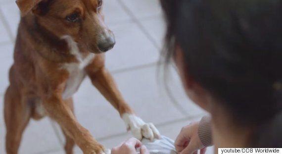 아르헨티나의 장기 이식 홍보영상, 제목은 '사람과