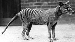 당신이 절대 보지 못할 블록버스터 시리즈, '아리아나 존스 : 멸종 동물