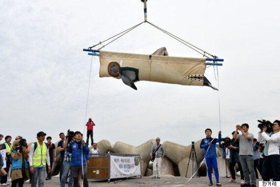 [현장] 남방큰돌고래 태산이·복순이가 6년 만에 고향 바다로 돌아가던