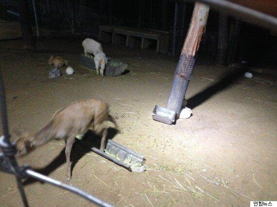 주행성 동물들은 야간영업에 스트레스