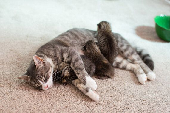 버려진 새끼 고양이들의 엄마가 된