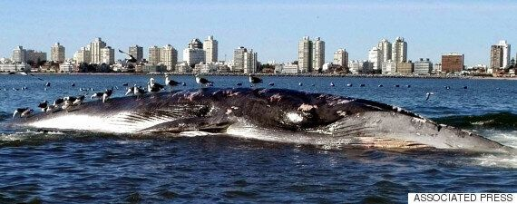 고래와 어선 충돌 방지하는 '웨일워치' 온라인 서비스가