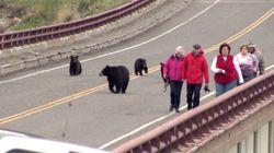 관광객을 놀라게 한 어미곰과 아기곰