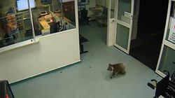 호주의 병원 응급실을 침입한 이상한