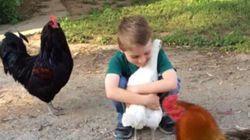 주인을 알아본 닭의 따뜻한