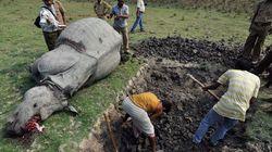 올해 가장 많은 코뿔소가 밀렵당할