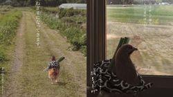 일본의 닭집에 붙은 슬픈
