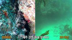 2008년과 2013년 제주 강정 앞바다 모습(사진,