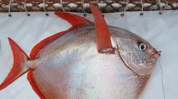 세계 최초, 따뜻한 피가 흐르는 물고기