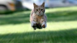왜 고양이는 응가를 하면 미친 듯이