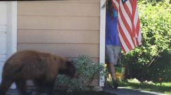 길모퉁이에서 곰과 마주친 남자에겐 어떤