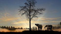 진짜 코끼리를 만난 적이