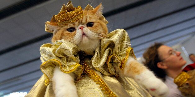 A woman displays her cat in a fashion costume during two-days cat and dog exhibition in Minsk, Belarus,...
