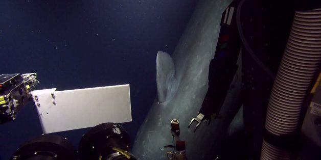 580m 바다에서 만난 거대한 향유고래의