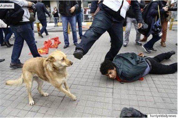 이스탄불 노동절 시위에 나타나 영웅이 된 개(사진,
