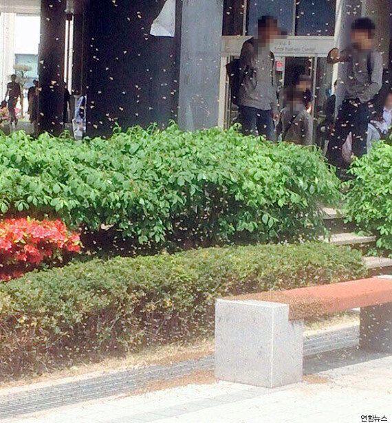 숭실대학교 캠퍼스에서 벌어진 벌떼