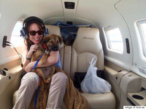 유기견을 살리는 비행기