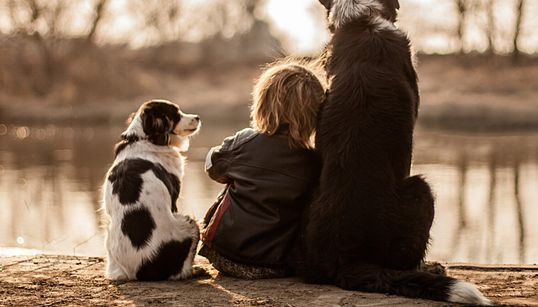 아이와 세 마리 반려견의 아름다운
