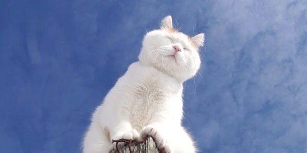 고양이가 알려주는 인생의