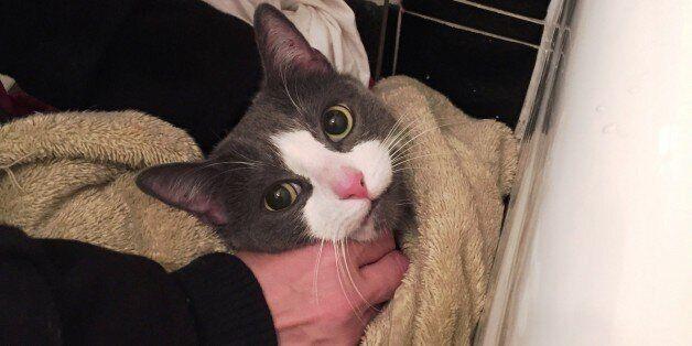 뉴욕 폭발사고로 잃었던 고양이를 찾은