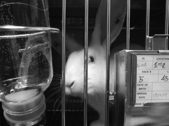 토끼가 마스카라를 바르지 않는 날을 위해   화장품 동물실험 금지법 통과를
