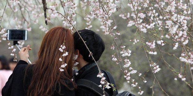 '꽃비'(花雨) 비장한 아름다움을