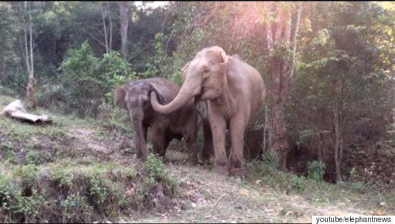 3년 만에 재회한 어미와 아기 코끼리가 서로를 반가워 하는