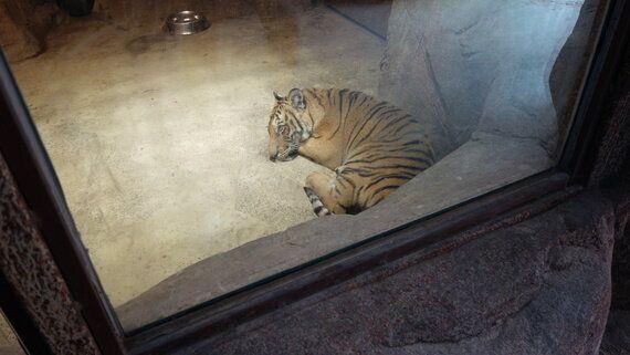 철창 안에서 미쳐가는 동물들 | '동물원법' 더 이상 미뤄선