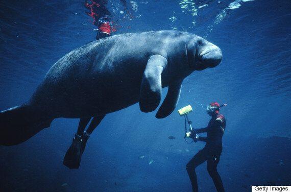 수영 도중, 물속에서 이상한 동물을 발견한 여성의