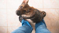 개는 냄새로 전립선암을 진단할 수