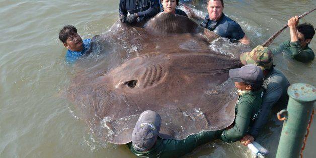 세계에서 가장 큰 민물고기