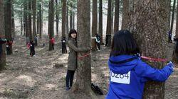 한국이 '트리 허그' 세계 신기록을