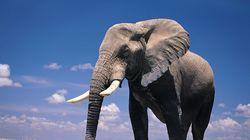 서울대공원 코끼리 똥이 '종이'로