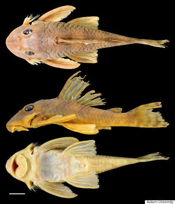 새로 발견한 물고기에 스타워즈 캐릭터 이름을