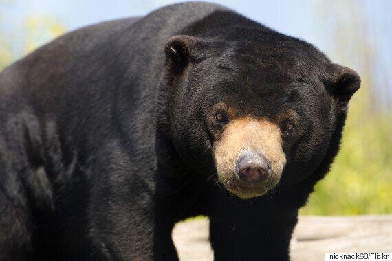 믿기 어렵지만, 이것은 곰이다(경고: 끔찍한