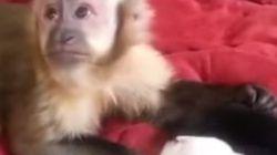 원숭이에게 강아지가