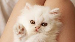 고양이가 당신을 더 건강하고 행복하게 만드는 이유