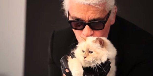 칼 라거펠트의 고양이는 1년에 35억을 번다(사진,