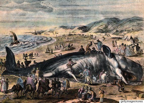 인간은 20세기에 3백만 마리의 고래를