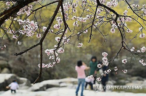 봄꽃 사진 잘 찍는 '꿀팁'