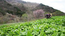 한국의 귀농인구가 사상 최대인