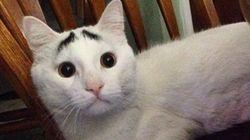 굉장한 눈썹을 가진 고양이, '샘'(사진,