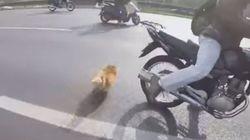 도로에 뛰어든 강아지를 구한